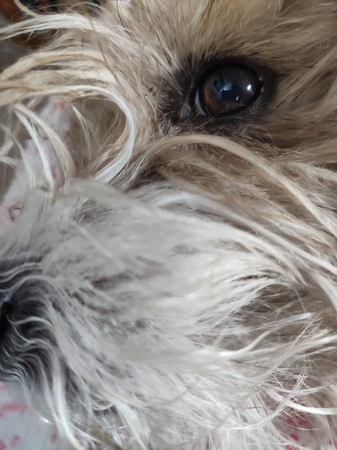 Macro al mio cane, ormai webstar di ogni recensione
